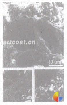 乳液改性砂浆的微结构